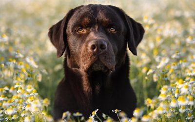 Servizo Fotografico al vostro cane? si riparte