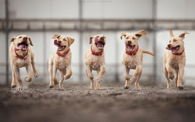 Come fotografare i cani 5 consigli utili