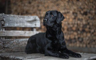 Come fotografare un cane nero