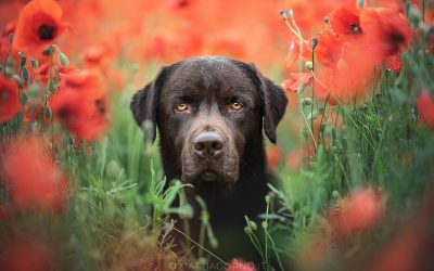 Corso – Workshop Dog Photography Giugno 2020